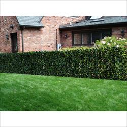 Century Home Living Fence Covering Artificial Plane Osmanthus Leaf