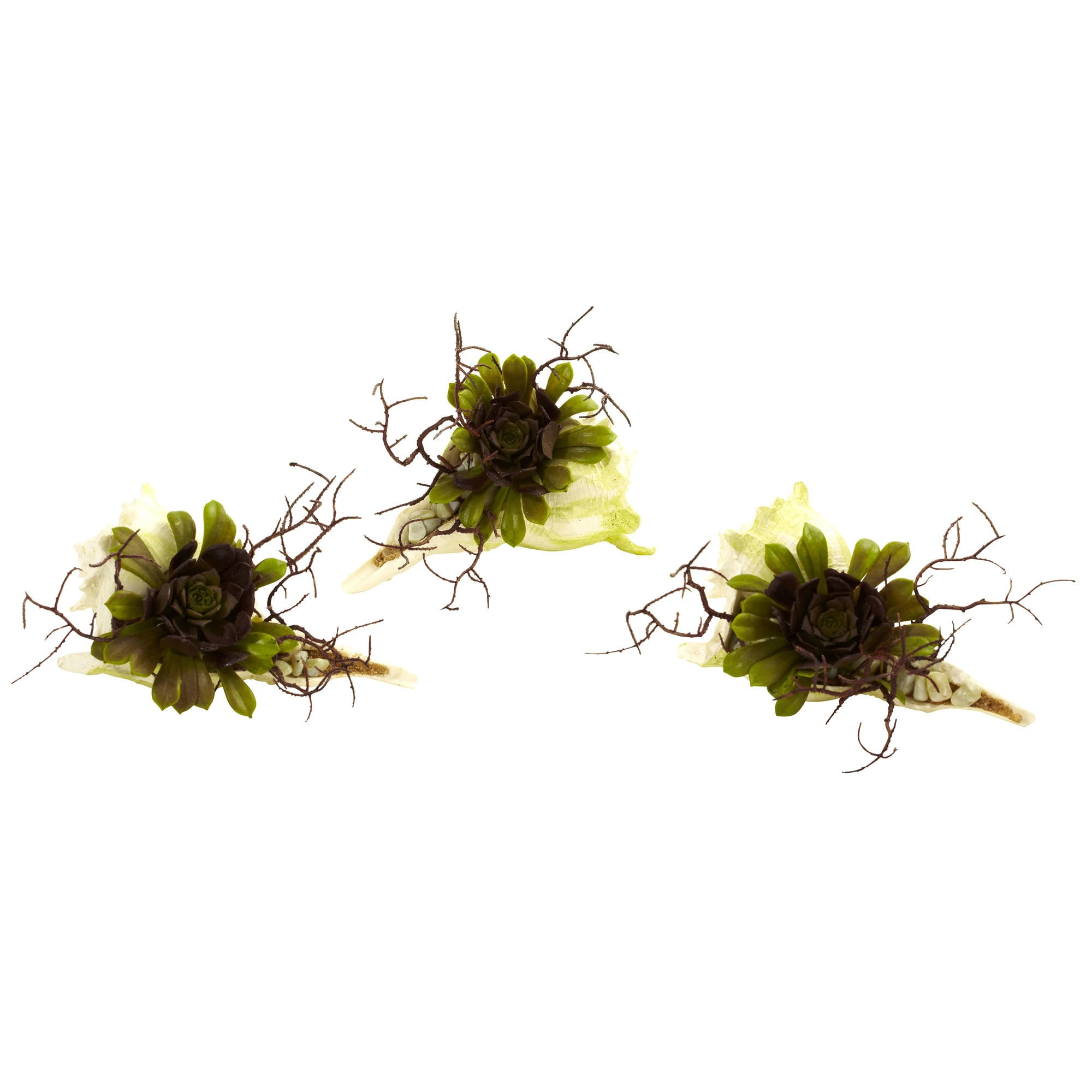 Nearly Natural - Wispy Succulent with Seashell (Set of 3) 151826251