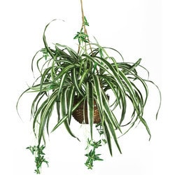 Nearly Natural - Spider Hanging Basket Silk Plant