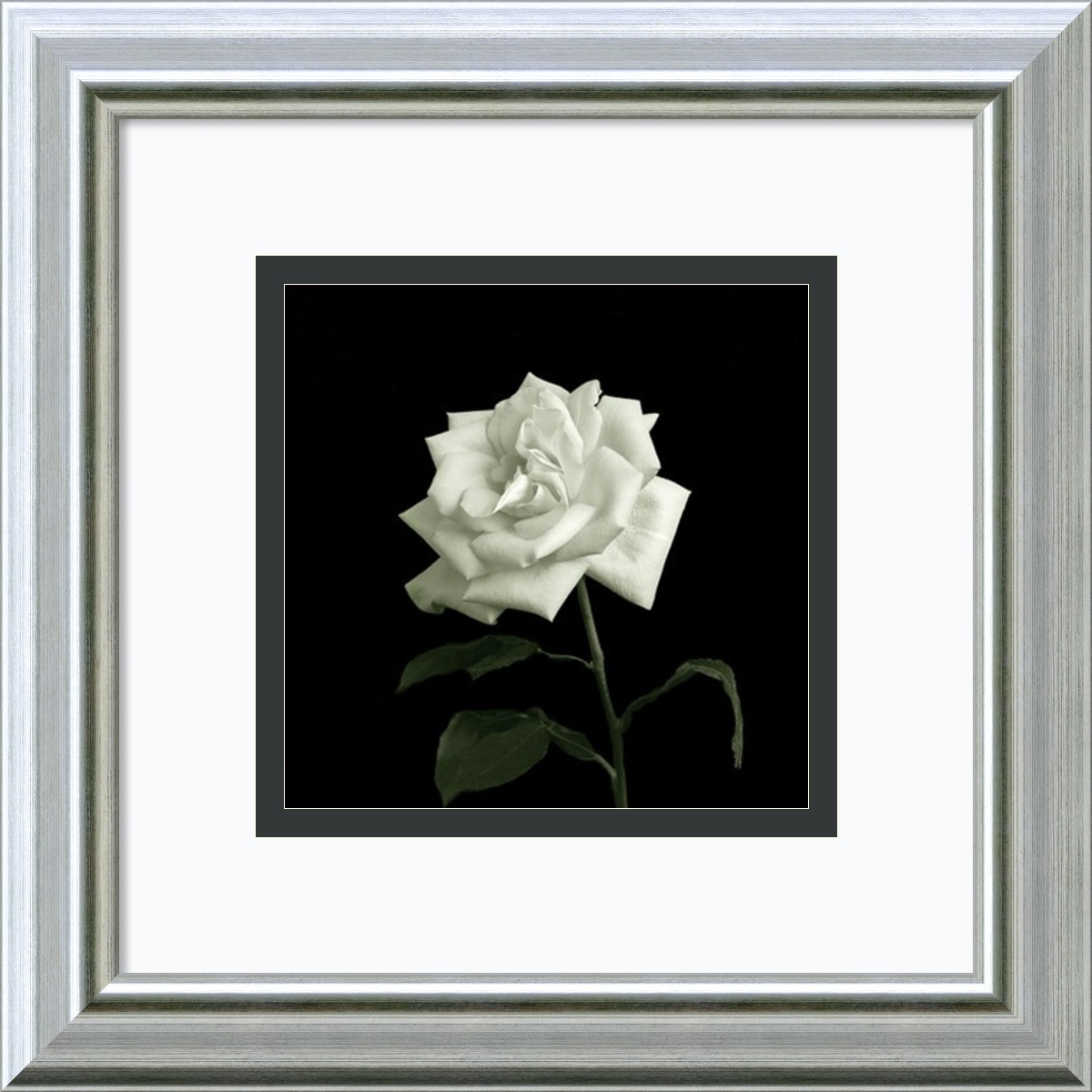 Amanti Art - Walter Gritsik 'Flower Series VIII' Framed Art Print 12 x 12-inch 150529151