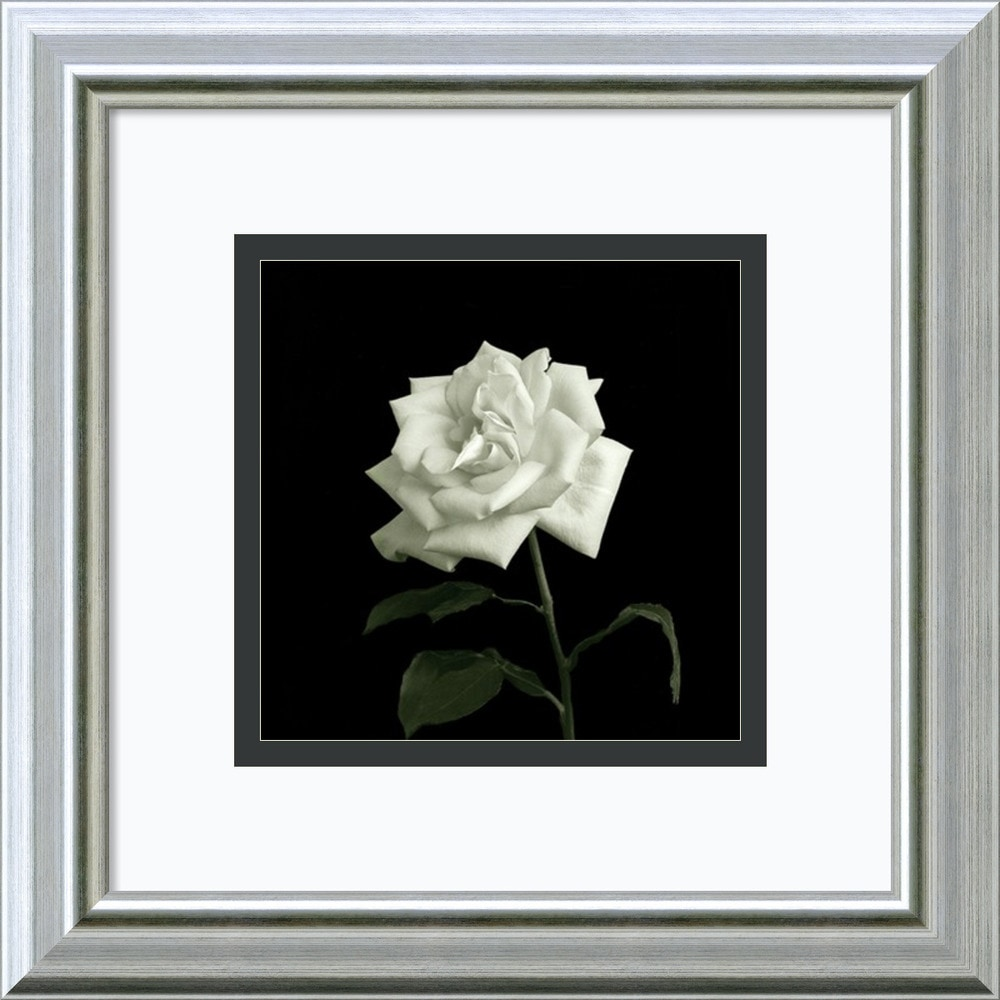 Amanti art walter gritsik 39 flower series viii 39 framed art for Wall artwork paintings