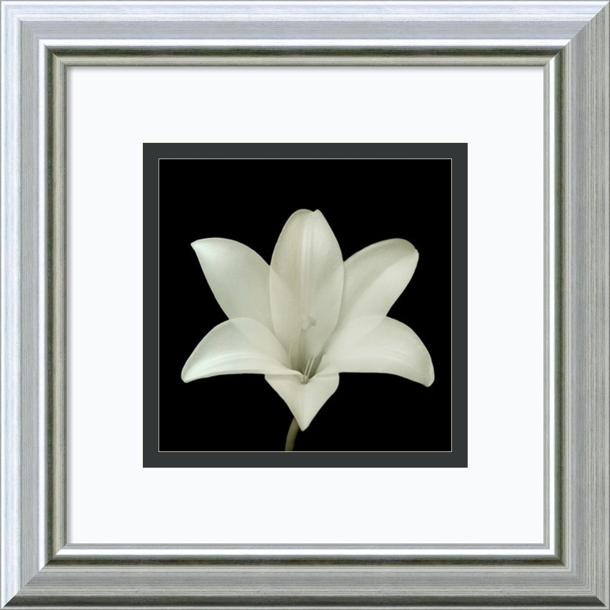 Amanti Art - Walter Gritsik 'Flower Series VII' Framed Art Print 12 x 12-inch 150529721